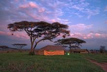 Safari Tented Camp In Savannah