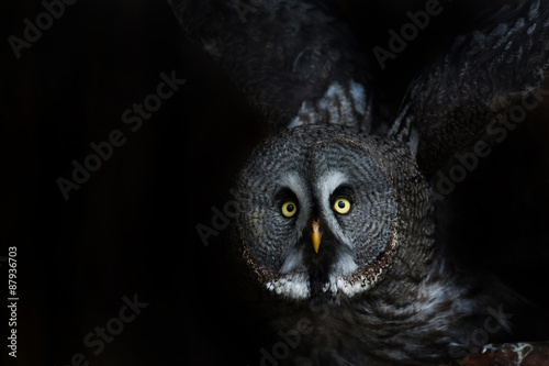 In de dag Uilen cartoon big eyed owl, staring owl
