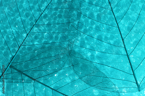 Ingelijste posters Decoratief nervenblad Abstract skeleton leaves background