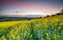 Sunrise Over Rapeseed Fields