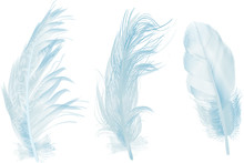 Three Light Blue Feathers Isol...