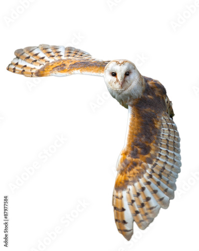 Deurstickers Uil Barn Owl In Flight