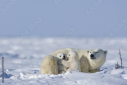 Recess Fitting Polar bear Eisbärin mit Jungen