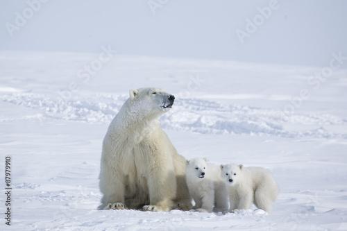 Deurstickers Ijsbeer Eisbärin mit Jungen