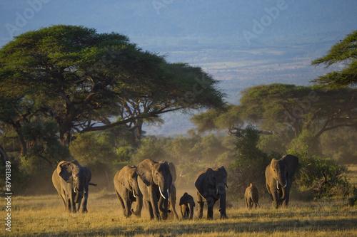 Foto op Plexiglas Afrika Elefantenherde