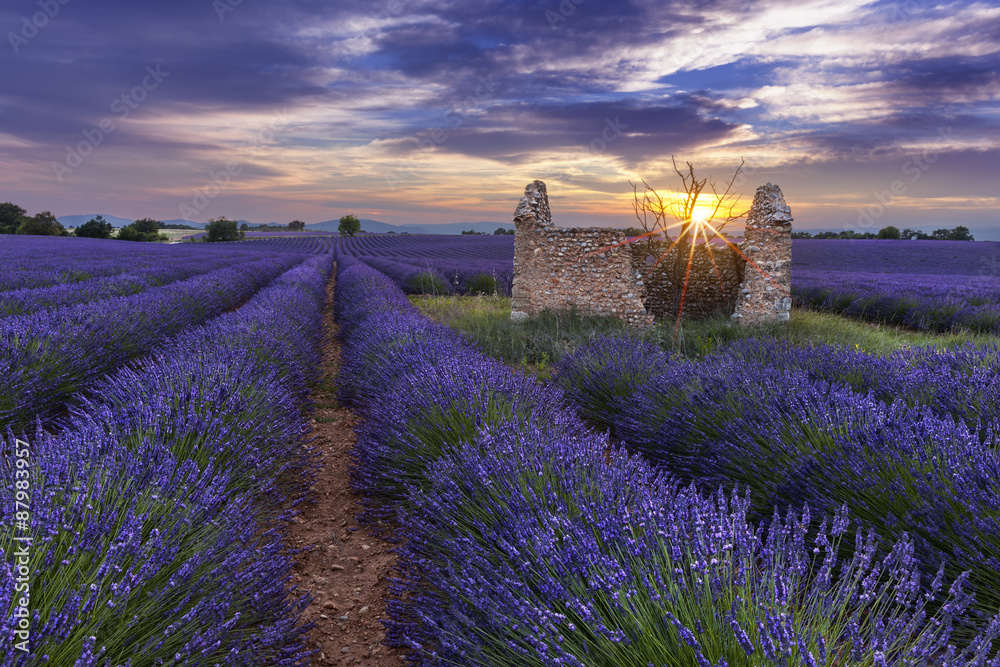 Sunset on lavender field behind a ruined hut with a tree