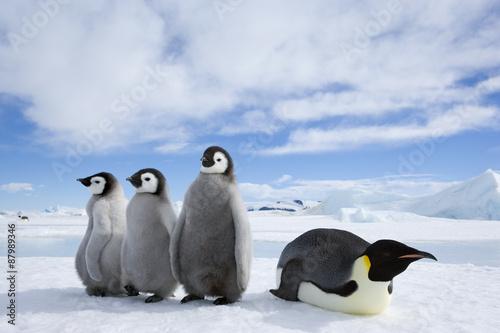 Tuinposter Pinguin Kaiserpinguin mit Küken