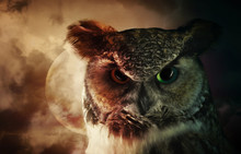Scary Night Owl On The Hunt