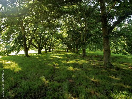 Spoed Foto op Canvas Paseo de árboles
