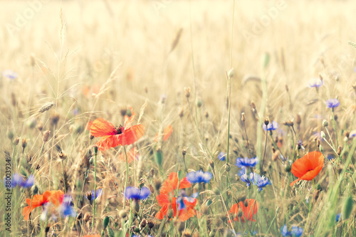 Fotografija  Composition with meadow flowers. Nice summer background.