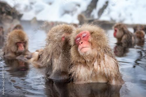 Foto op Plexiglas Aap Eine Gruppe Makaken baden in einer heißen Quelle in Japan