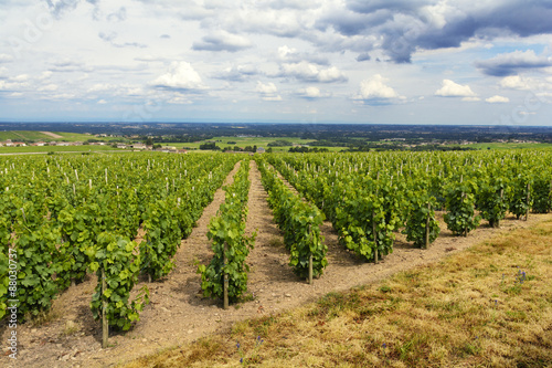 Fotobehang Wijngaard Vineyards of Fleurie Village, Beaujolais, France
