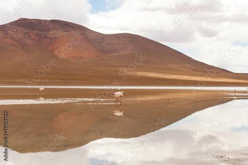 Photo  Fenicotteri camminano su laguna di un altopiano andino, Bolivia