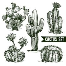 Cactus Sketch Set