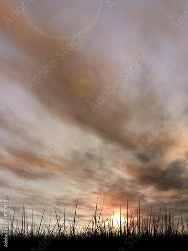 Foto op Aluminium Zalm Black grass over sky sunset background