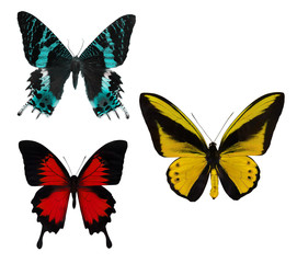macro of three tropical butterflies on white