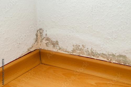 Fotografie, Obraz  Schimmel in Wohnung