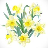Lush yellow daffodils