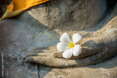Tuinposter Boeddha plumeria flower on ancient hand of buddha statue
