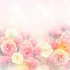 Obraz Roses Background