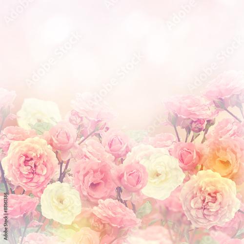 Roses Background - 88161386