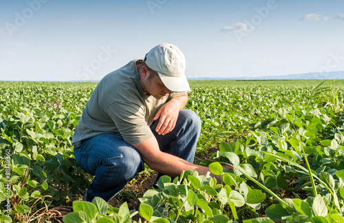 farmer in soybean fields Canvas Print
