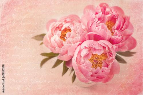 Peony flowers - 88180598