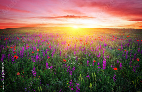 Field with grass, violet flowers and red poppies against the sun