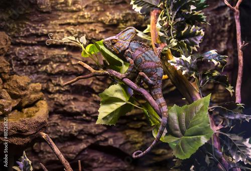 live wild reptiles lizards shot close-up in nature Wallpaper Mural