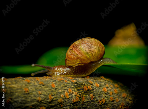 Great closeup of dark colored snail finishing moving from green