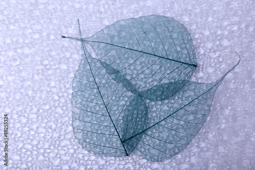 Foto op Aluminium Decoratief nervenblad Abstract skeleton leaves background