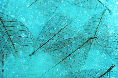 Poster Decorative skeleton leaves Abstract skeleton leaves background