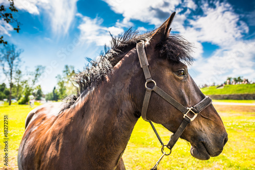 Deurstickers Ezel Thoroughbred horse close up in the front of the fortress