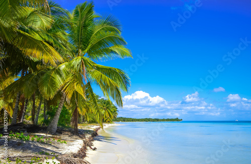 Deurstickers Tropical strand Beach on the tropical island