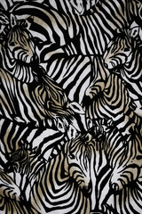 FototapetaTexture fabric of Many zebra herd for background