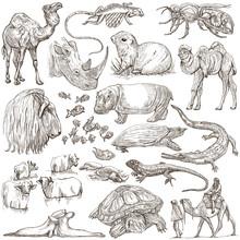 Animals Around The World. Freehand Sketches, Pack