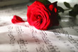 Beautiful rose on music sheets, closeup