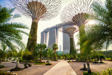 The Supertree At Gardens By The Bay And Marina Bay Sand