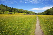 Paved Footpath Across Buttercup Meadows At Muker, Swaledale, Yorkshire Dales, Yorkshire