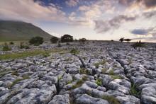 Limestone Pavement And Inglebo...