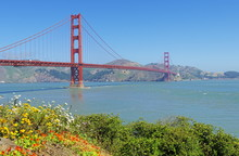 Golden Gate Bridge With Flowers On Hillside In Foreground, San Francisco, California