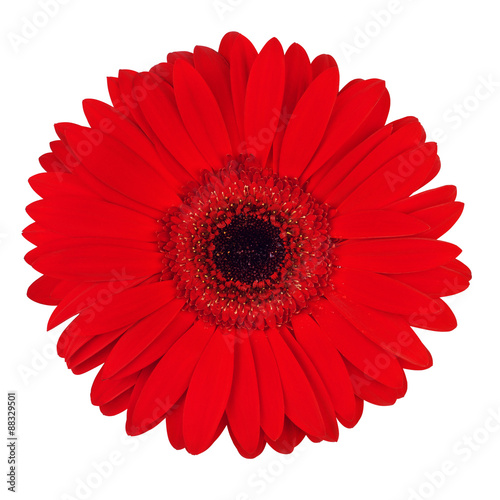 Door stickers Gerbera Red Gerbera