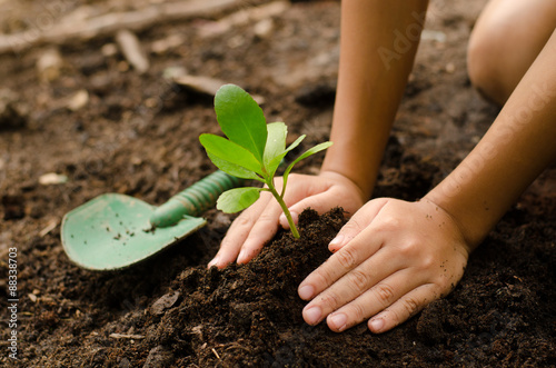 Poster Vegetal Close up kid hand planting young tree