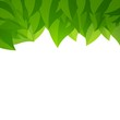 Vector Illustration of a Background with Green Leaves