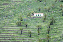 Finca, Palm Grove, Near Alajero, La Gomera, Canary Islands, Spain