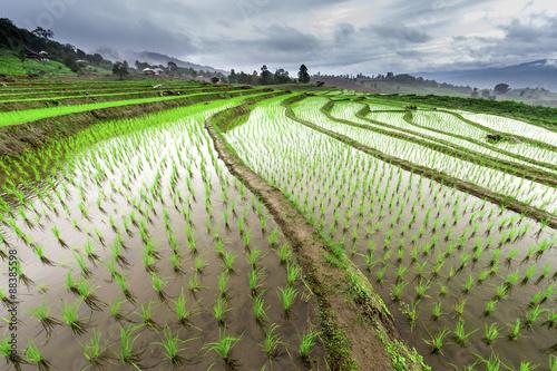 Garden Poster Rice fields Green Terraced Rice Field in Pa Pong Pieng in raining season, Mae Chaem, Chiang Mai, Thailand