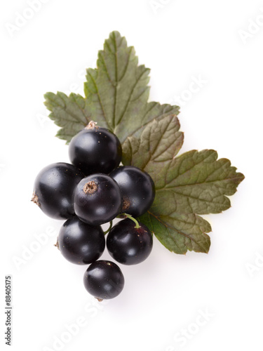Stampe  Blackcurrant