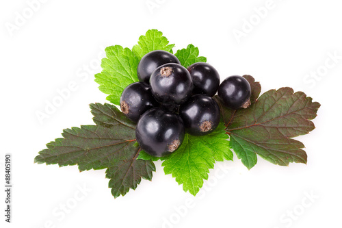 Fotografia  Blackcurrant