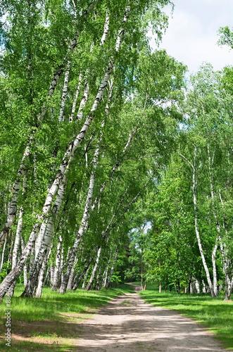 lesna-droga-w-gaju-brzozowym