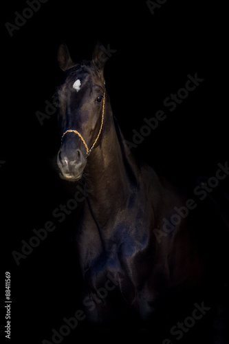 Fototapety, obrazy: Black stallion portrait isolated on black background